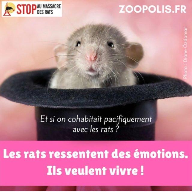 rats2_1